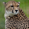 SlowCheetah icon